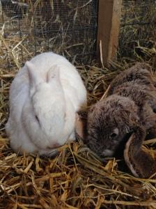 Dagwood and his stuffed bunny pal.