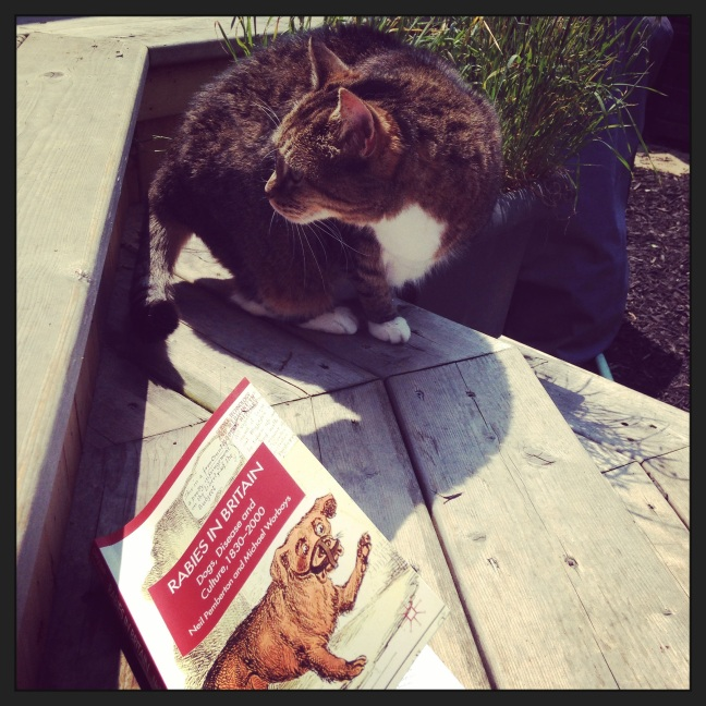 Summertime reading - Miss Jenny isn't sure what to make of this book.