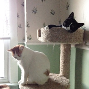 Ollie and Ernie have adjusted very well to life indoors.