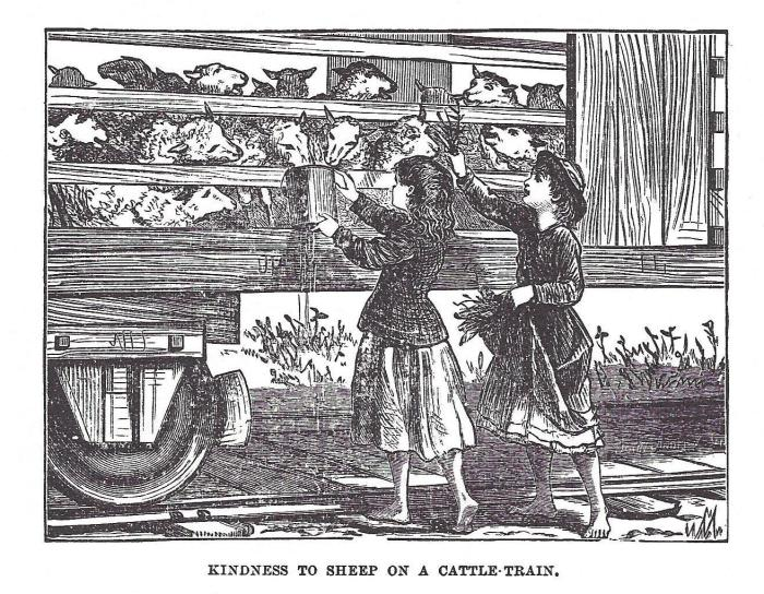 Kindness to Sheep on a Cattle Train (from THS book)